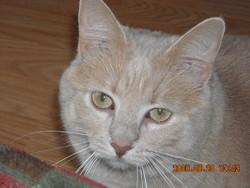 Cayenne, chat Gouttière