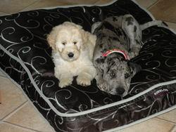 Moustique Et Sybelle, chien