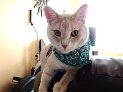 Charlot, chat Gouttière