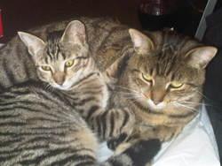 Karma, chat Gouttière