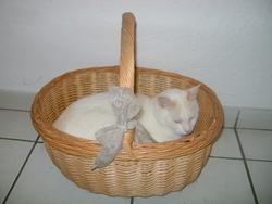 Biby, chat Gouttière