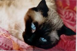 Litchi, chat Thaï