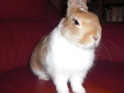 Kidy, rongeur Lapin