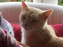 Décembre Dit Mimi Pour Les Intimes, chat
