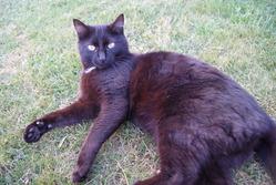Zouzou, chat Gouttière