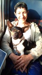 Saiga, chien Jack Russell Terrier