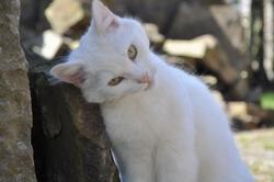 Cécile, chat Gouttière