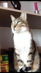 Cékoi, chat Gouttière