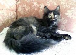 Célèste Marine, chat Gouttière