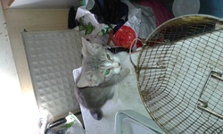 Cendre, chat