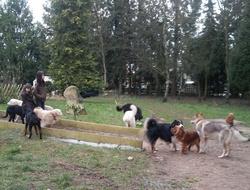 Centre Aéré Canin, chien