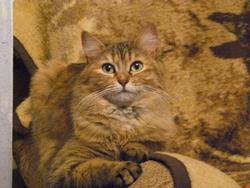 Cerise, chat Gouttière