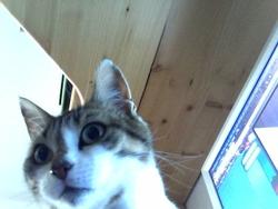 Cerise, chat