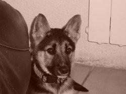 Cerise, chien