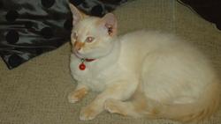 César , chat Gouttière