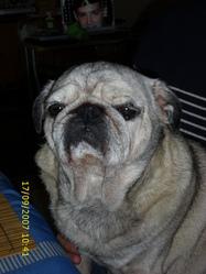 Cesar, chien Carlin