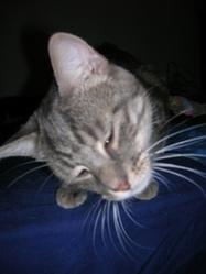 Césare, chat Gouttière