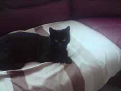 Moustique, chat Gouttière