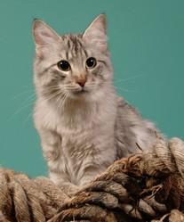 Ezechiel , chat Angora turc