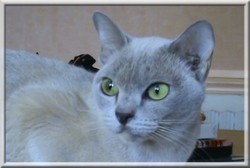 Nefer, chat Burmese