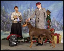 Ch Tahoui'S Red Magic Woman, chien Dobermann