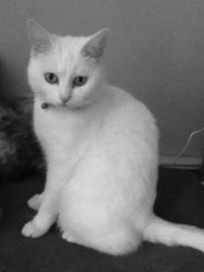 Chacha Distel, chat Gouttière