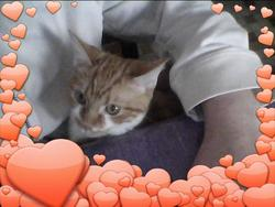 Chachat, chat Gouttière