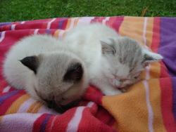 Chado Et Neige, chat