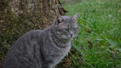 Chakira, chat Gouttière