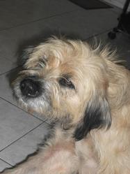Chalye, chien
