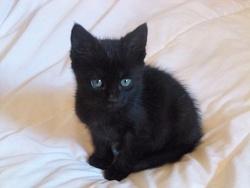 Chamallow, chat Gouttière