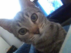 Chanel, chat