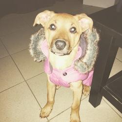 Chanel, chien