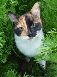 Chanelle, chat