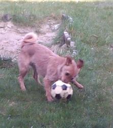 Chanelle, chien