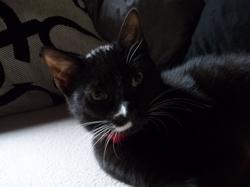 Channel, chat Gouttière