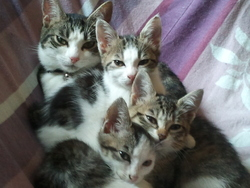 Chanu'S Familie, chat