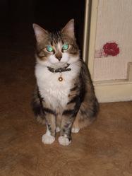 Chapi, chat Gouttière