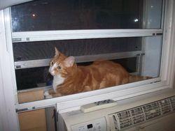 Charli, chat Gouttière