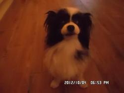 Charlie, chien