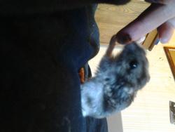Charlie, rongeur Hamster
