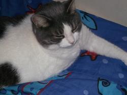 Charlotte, chat Gouttière