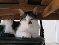 Chaska, chat Gouttière