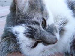 Chat Mallow, chat Gouttière