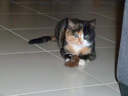 Chataigne, chat Gouttière
