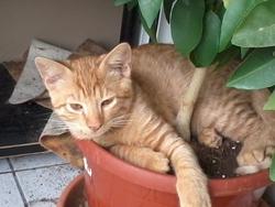 Chatchat, chat Gouttière