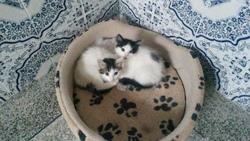 Chaton , chat Gouttière