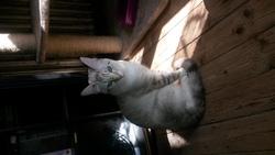 Chaton, chat Gouttière