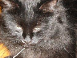 Chatouille, chat Gouttière