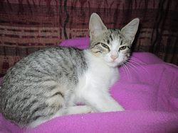 Chatounette, chat Gouttière
